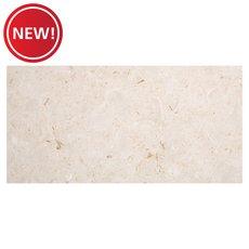 New! Barbados Shell Polished Limestone Tile
